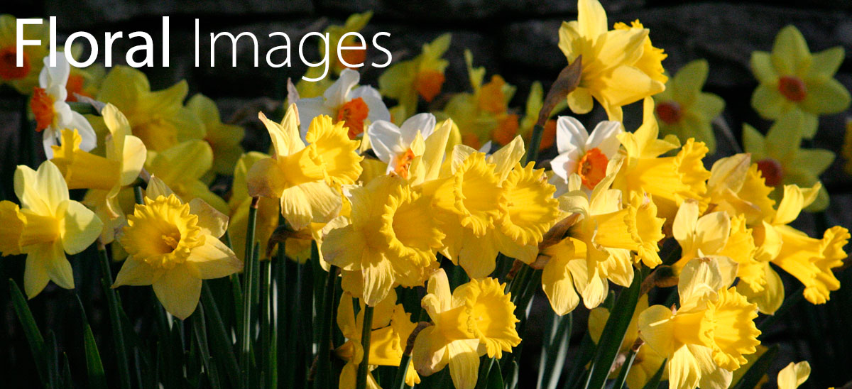Floral Photographic Images